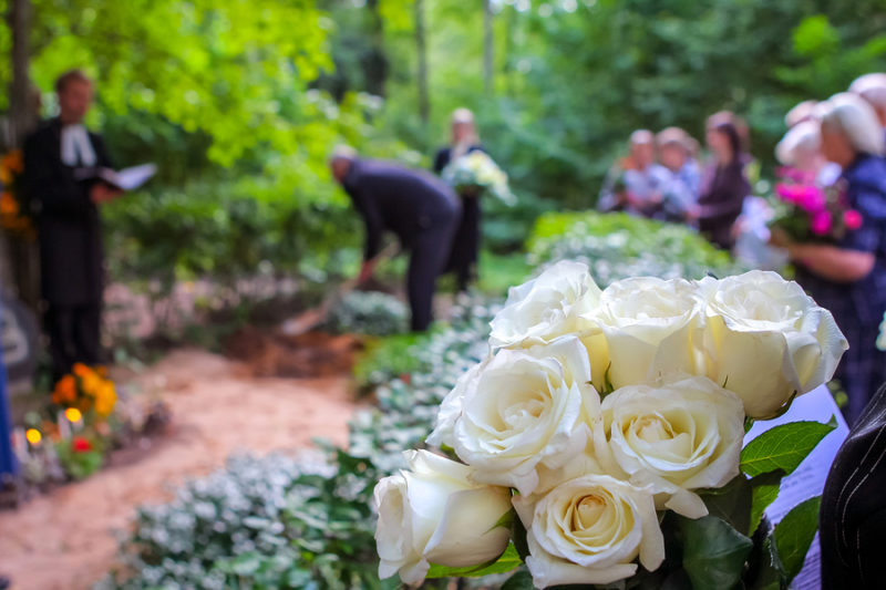 Roses in cemetery with people in the background. Funeral in cemetery; White roses in cemetery. Prayer at the tomb. Funeral ceremony. White roses at funeral near the grave.