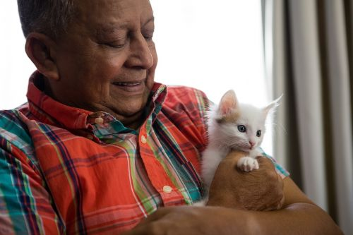 Happy senior man playing with kitten. Emotional Support Animal