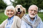 happy senior couple with adorable golden retriever dog in park showing emotional support animal